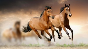 running-horses-wallpaper