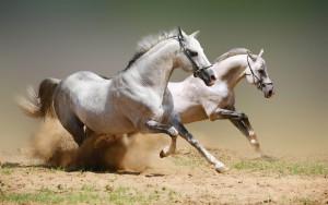 wild-horses-13